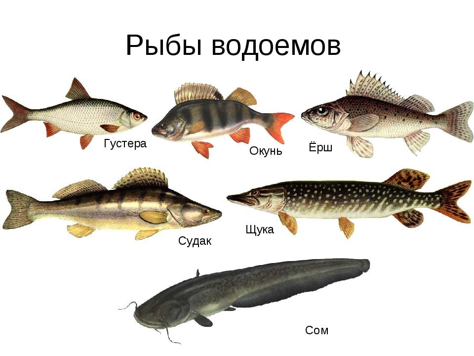 твоя работа название картинки речной рыбы находится