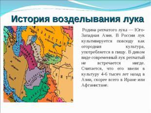 История возделывания лука Родина репчатого лука — Юго-Западная Азия. В России