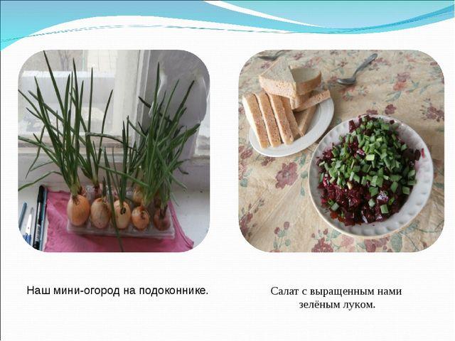Наш мини-огород на подоконнике. Салат с выращенным нами зелёным луком.
