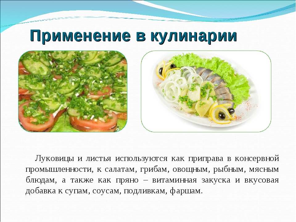 Применение в кулинарии Луковицы и листья используются как приправа в консервн...