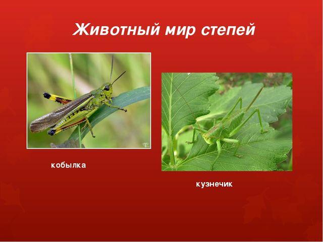 Животный мир степей кобылка кузнечик