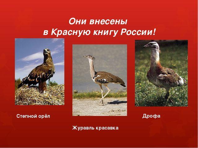 Они внесены в Красную книгу России! Степной орёл Журавль красавка Дрофа