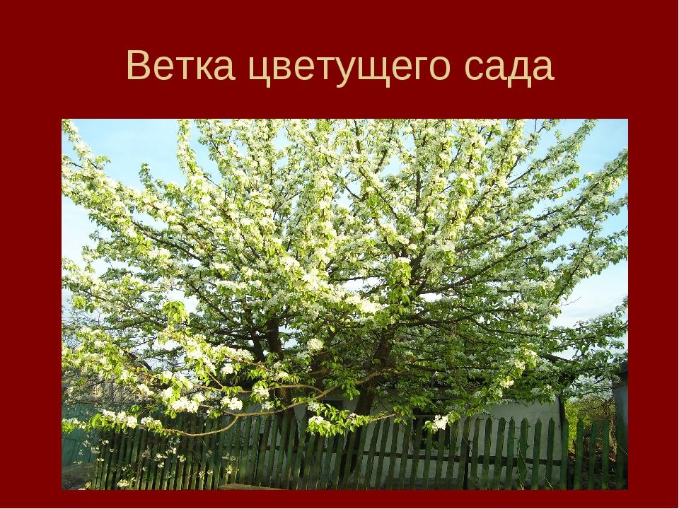 Ветка цветущего сада