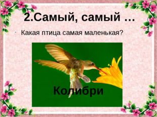 Какая птица самая маленькая? 2.Самый, самый … Колибри