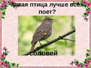 Какая птица лучше всех поет? соловей
