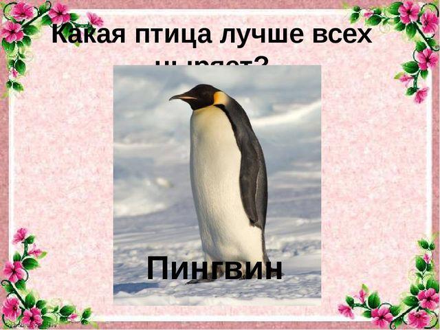 Какая птица лучше всех ныряет? Пингвин