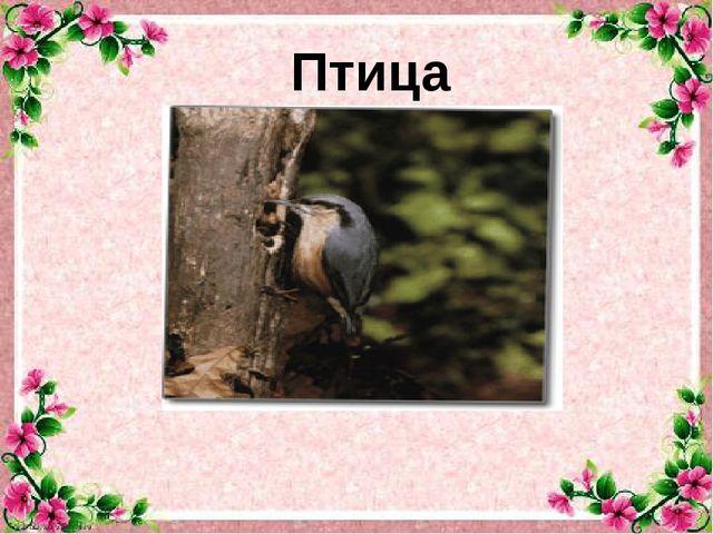 Птица -акробат