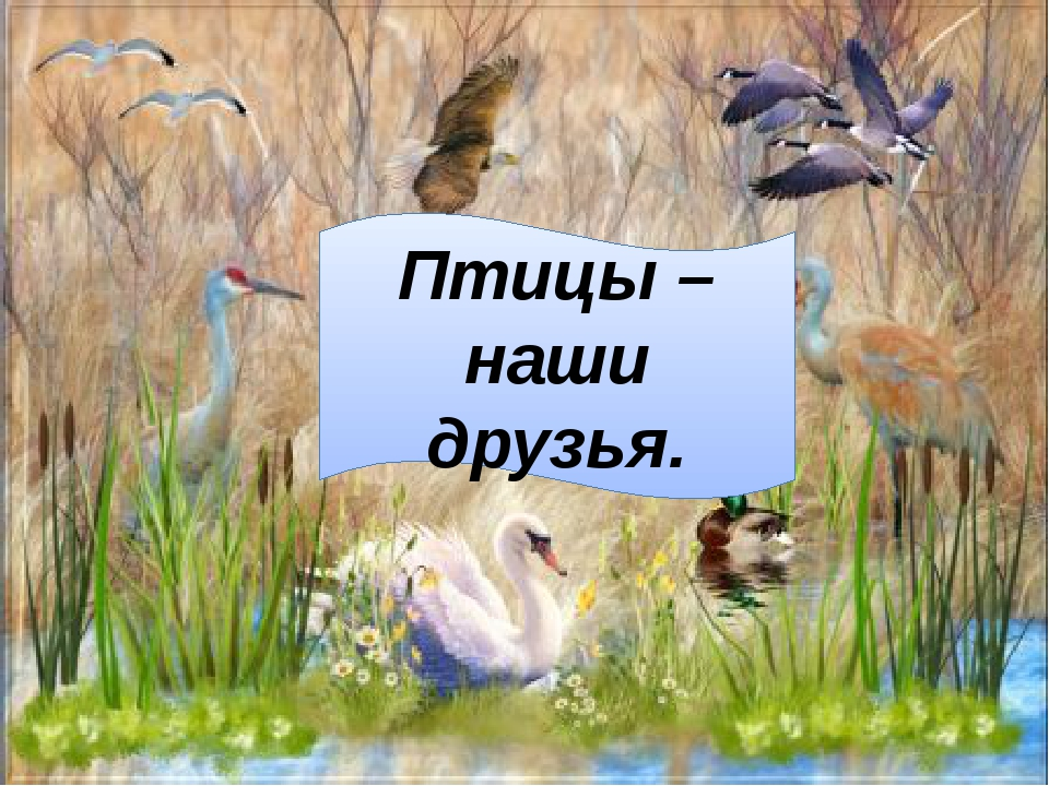 Птицы –наши друзья.