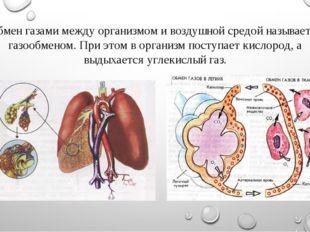 Обмен газами между организмом и воздушной средой называется газообменом. При