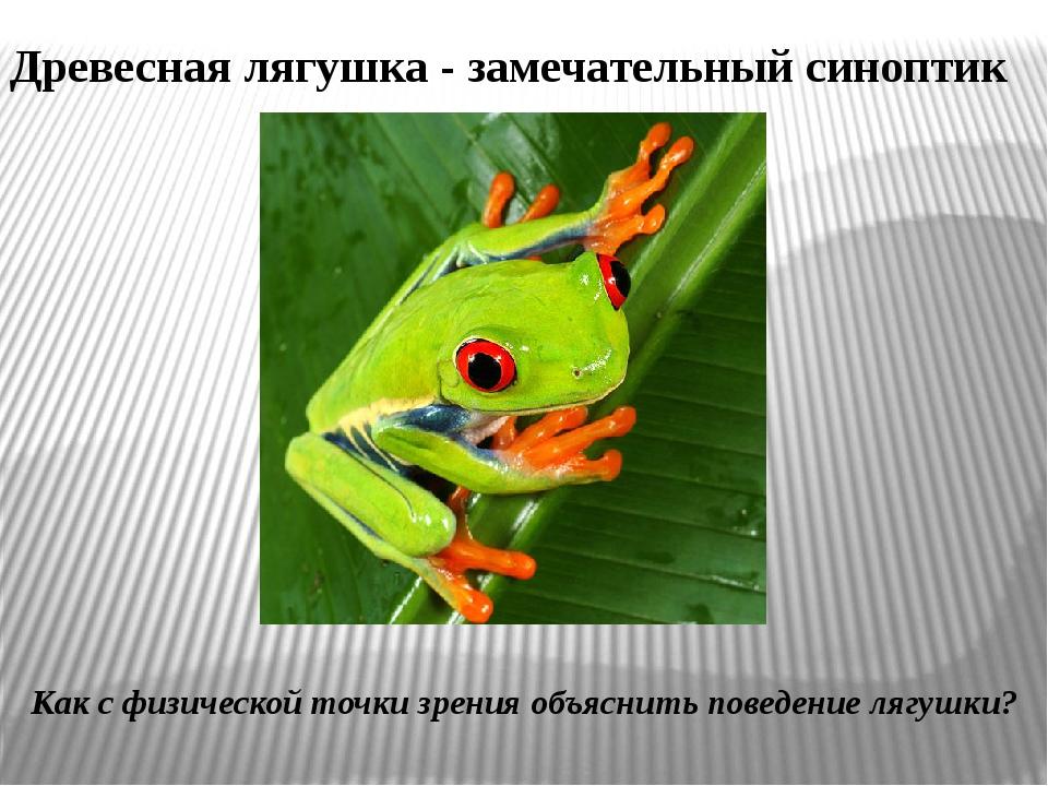 Древесная лягушка - замечательный синоптик Как с физической точки зрения объя...