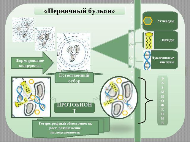 «Первичный бульон» Гетеро-трофный обмен веществ Углеводы Липиды Нуклеиновые...