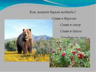 Как зимует бурый медведь? Спит в берлоге Спит в снегу Спит в дупле Бродит по
