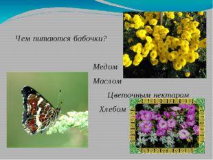 Чем питаются бабочки? Медом Маслом Цветочным нектаром Хлебом