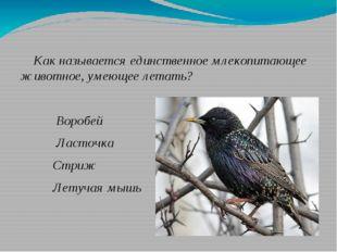 Как называется единственное млекопитающее животное, умеющее летать? Воробей