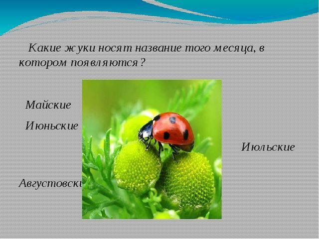 Какие жуки носят название того месяца, в котором появляются? Майские Июньски...