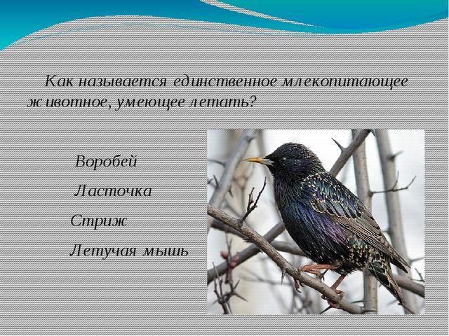 Как называется единственное млекопитающее животное, умеющее летать? Воробей...