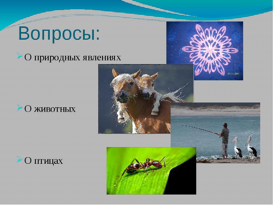 Вопросы: О природных явлениях О животных О птицах О насекомых