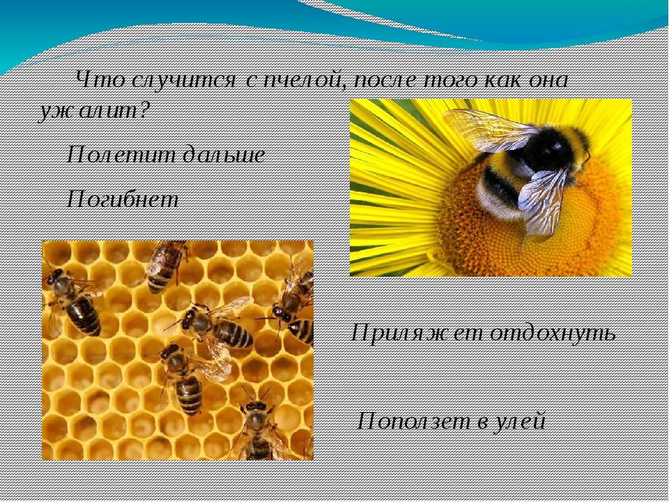 Что случится с пчелой, после того как она ужалит? Полетит дальше Погибнет Пр...