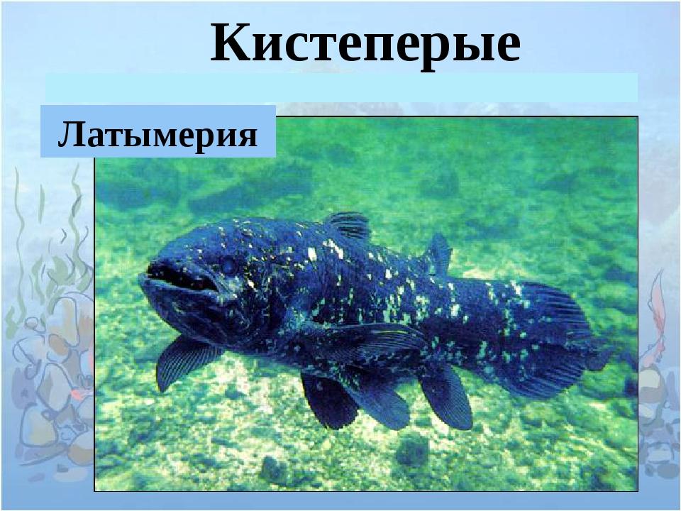 Кистеперые Латымерия