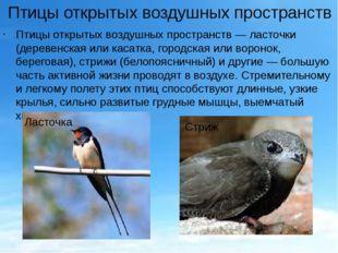 Птицы открытых воздушных пространств Птицы открытых воздушных пространств— л