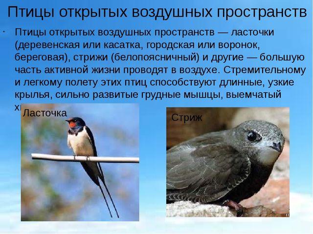 Птицы открытых воздушных пространств Птицы открытых воздушных пространств— л...