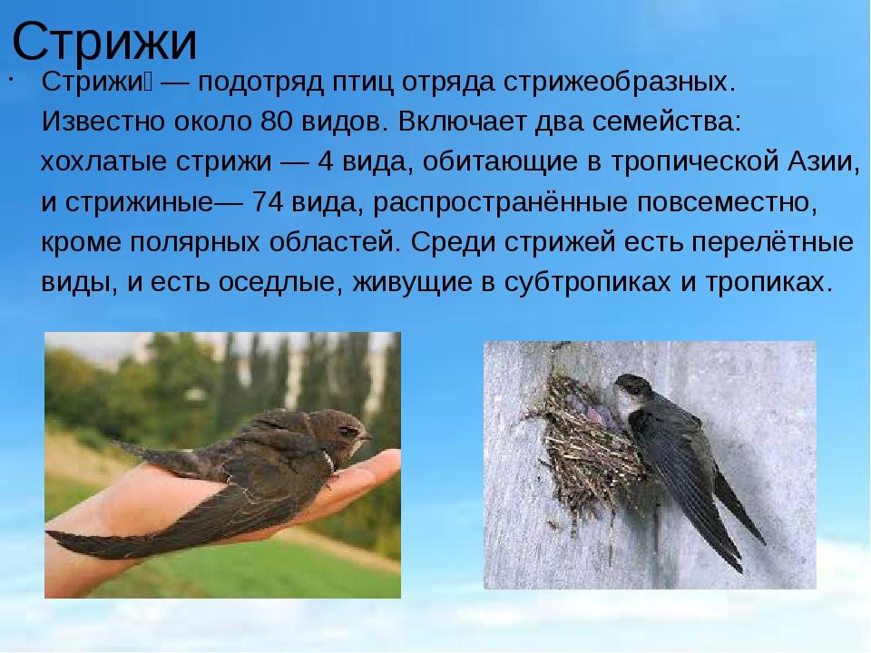 Стрижи Стрижи́— подотряд птиц отряда стрижеобразных. Известно около 80 видов...