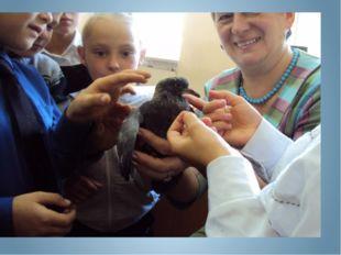 Мальчики нашего класса принесли с прогулки голубёнка. Он не умел летать. Мы