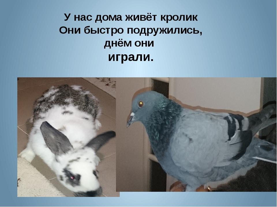 У нас дома живёт кролик Они быстро подружились, днём они играли.