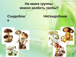 На какие группы можно разбить грибы? Съедобные Несъедобные