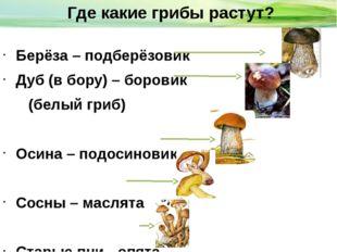 Берёза – подберёзовик Дуб (в бору) – боровик (белый гриб) Осина – подосинови