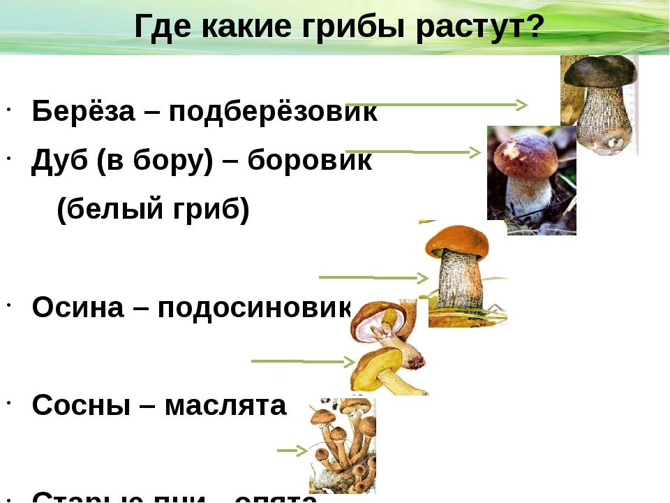 Берёза – подберёзовик Дуб (в бору) – боровик (белый гриб) Осина – подосинови...
