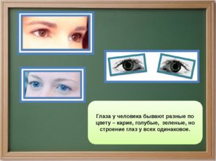 Глаза у человека бывают разные по цвету – карие, голубые, зеленые, но строени