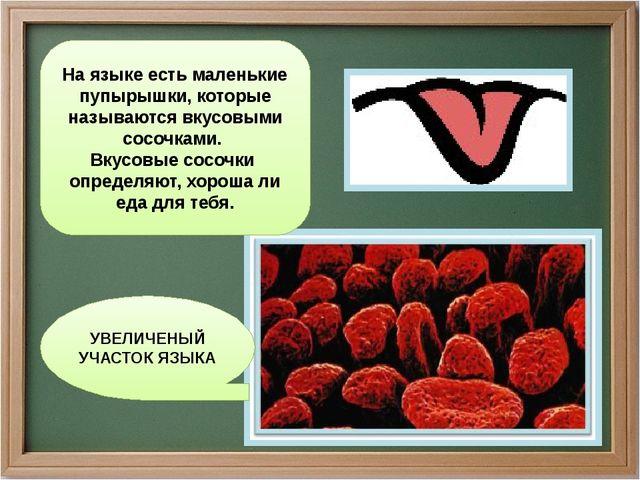 УВЕЛИЧЕНЫЙ УЧАСТОК ЯЗЫКА На языке есть маленькие пупырышки, которые называютс...