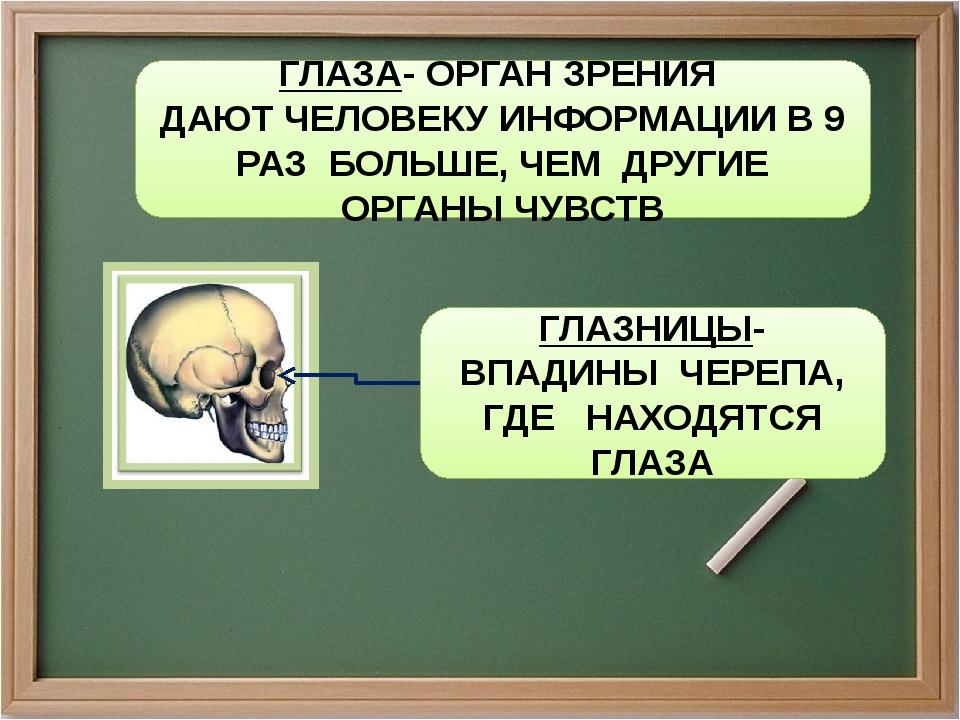 ГЛАЗА- ОРГАН ЗРЕНИЯ ДАЮТ ЧЕЛОВЕКУ ИНФОРМАЦИИ В 9 РАЗ БОЛЬШЕ, ЧЕМ ДРУГИЕ ОРГАН...