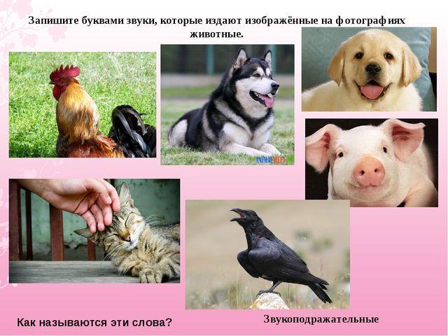 Запишите буквами звуки, которые издают изображённые на фотографиях животные....