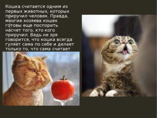 Кошка считается одним из первых животных, которых приручил человек. Правда, м