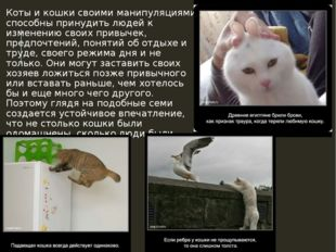 Коты и кошки своими манипуляциями способны принудить людей к изменению своих