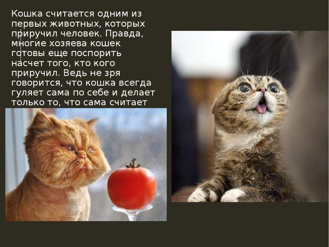 Кошка считается одним из первых животных, которых приручил человек. Правда, м...