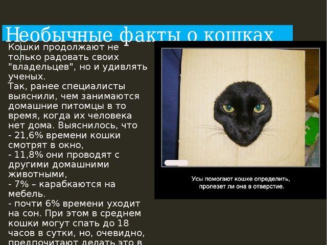 """Необычные факты о кошках Кошки продолжают не только радовать своих """"владельце..."""