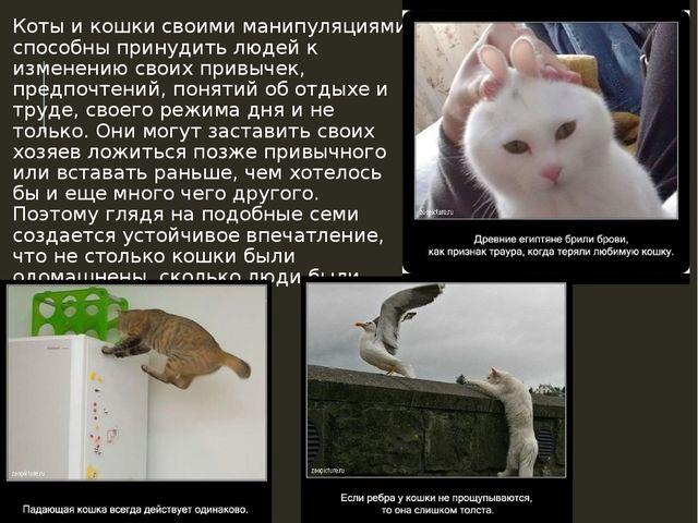 Коты и кошки своими манипуляциями способны принудить людей к изменению своих...