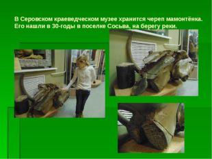 В Серовском краеведческом музее хранится череп мамонтёнка. Его нашли в 30-год