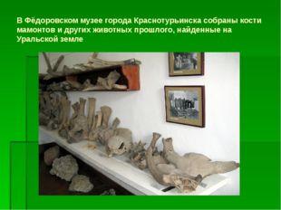 В Фёдоровском музее города Краснотурьинска собраны кости мамонтов и других жи
