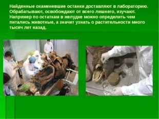 Найденные окаменевшие останки доставляют в лабораторию. Обрабатывают, освобож