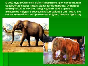 В 2010 году в Оханском районе Пермского края палеонтологи обнаружили скелет п