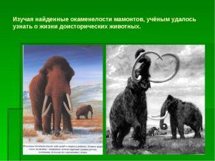 Изучая найденные окаменелости мамонтов, учёным удалось узнать о жизни доистор