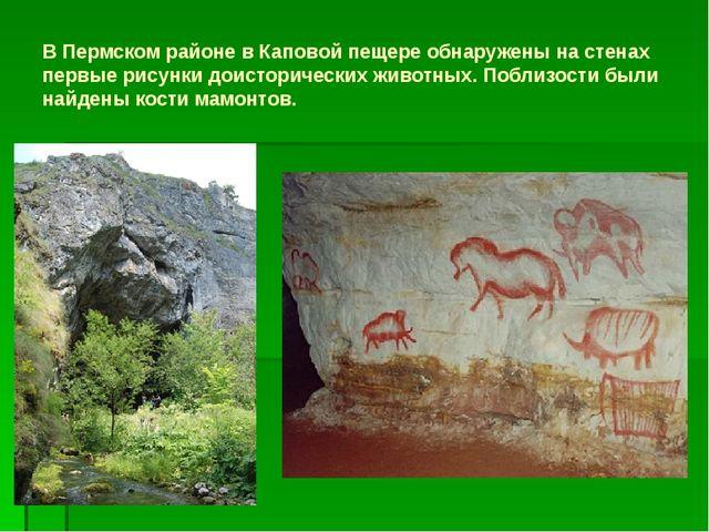 В Пермском районе в Каповой пещере обнаружены на стенах первые рисунки доисто...