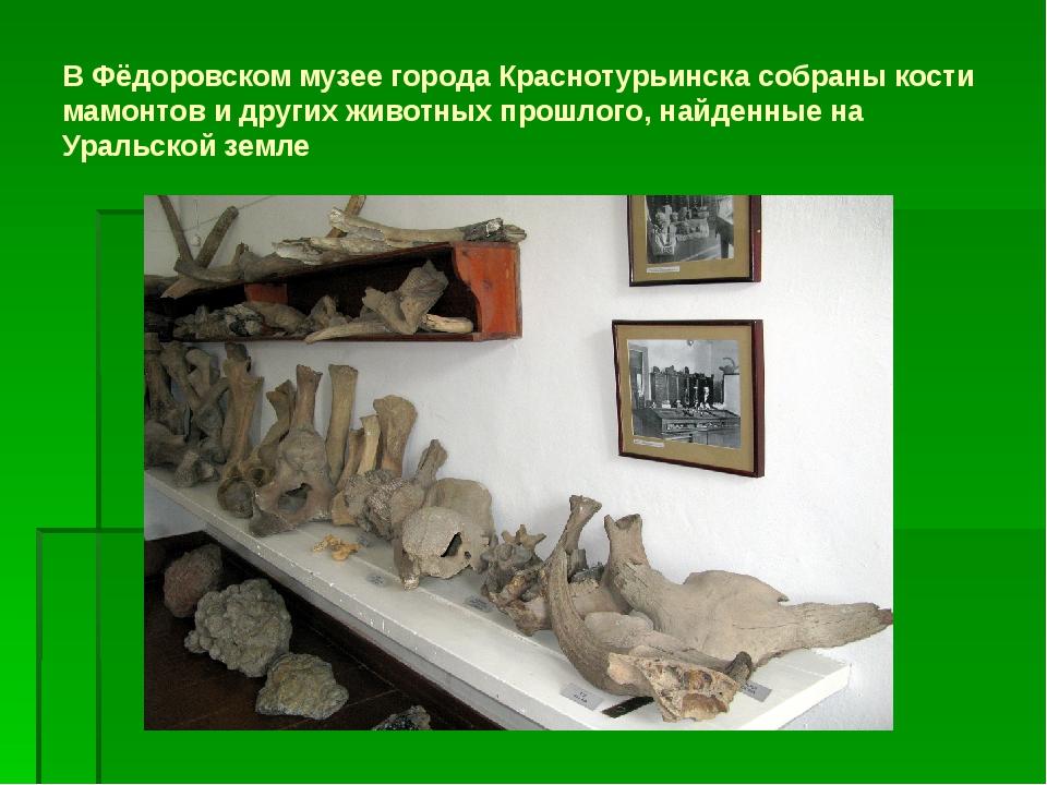В Фёдоровском музее города Краснотурьинска собраны кости мамонтов и других жи...
