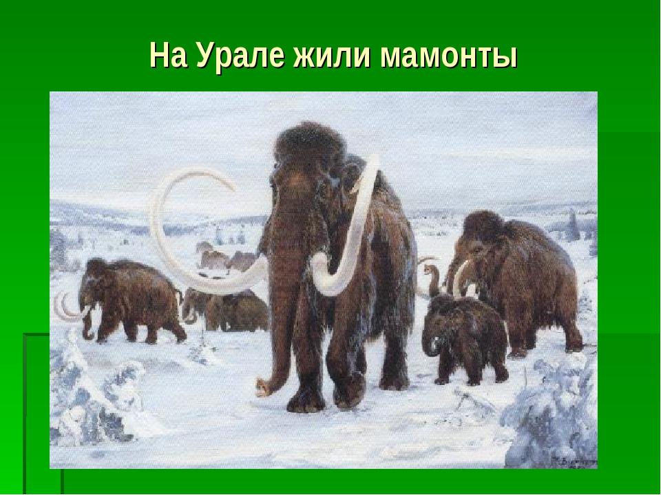 На Урале жили мамонты