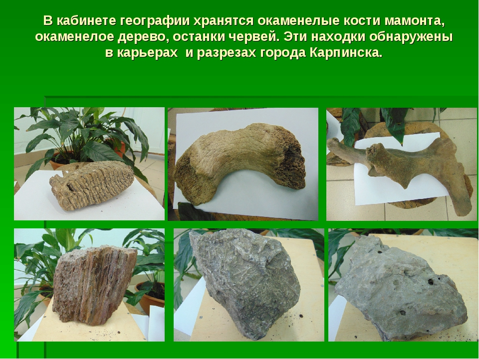 В кабинете географии хранятся окаменелые кости мамонта, окаменелое дерево, ос...