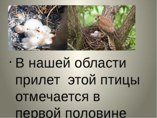 В нашей области прилет этой птицы отмечается в первой половине апреля. Своих